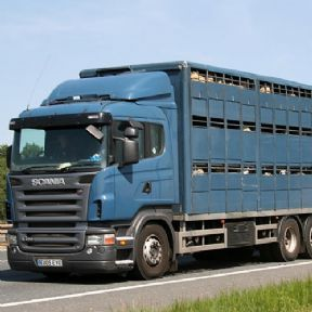 Avalon Assesments Ltd - NPTC  Level 2 Certicifice in TraPnsporting Animals by Road (Long Journeys)